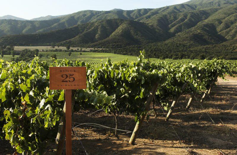 Expo -Wine Sagrada Familia: Rescando los vinos