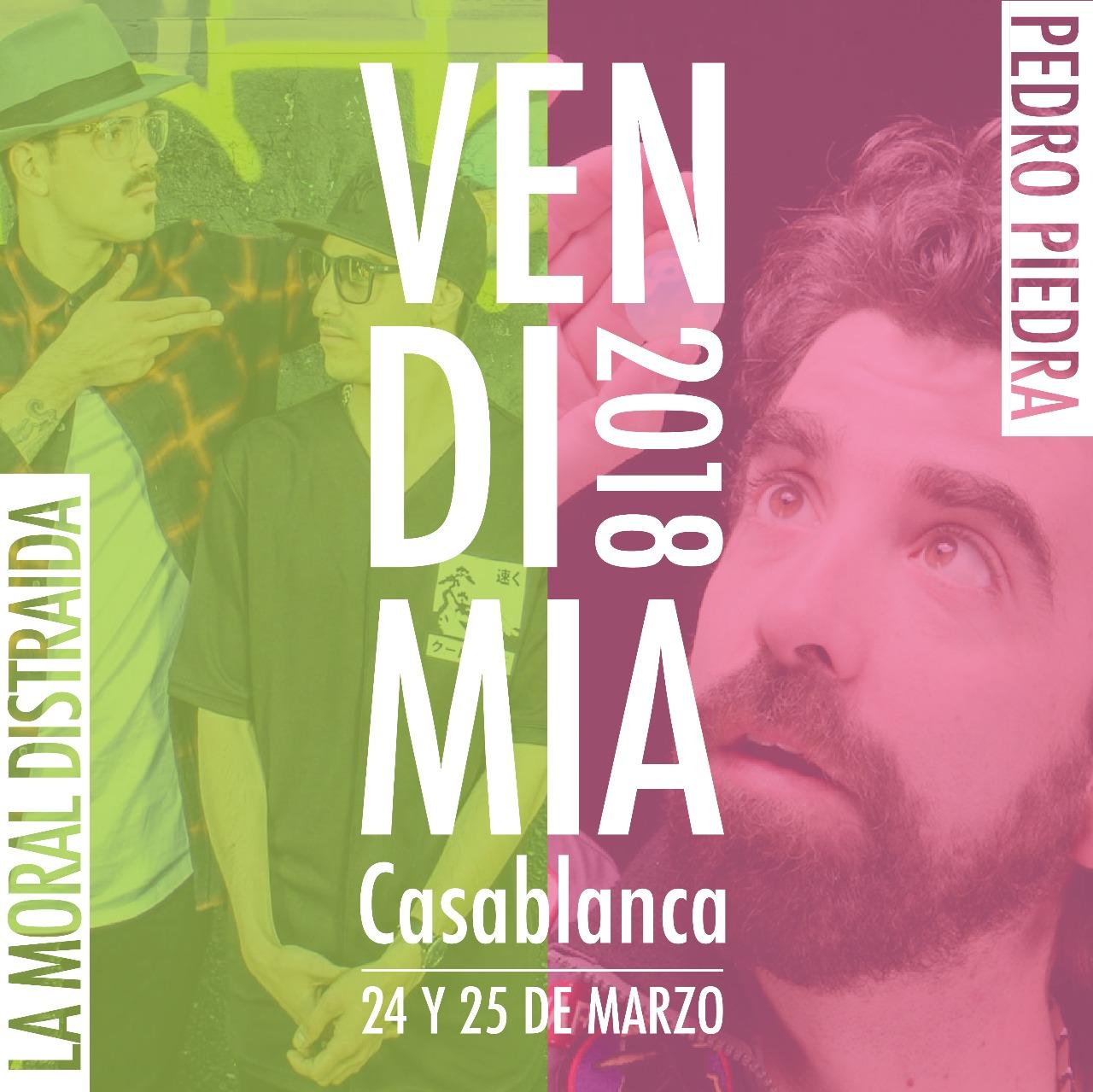 Casablanca se prepara para la VI Fiesta de la Vendimia.