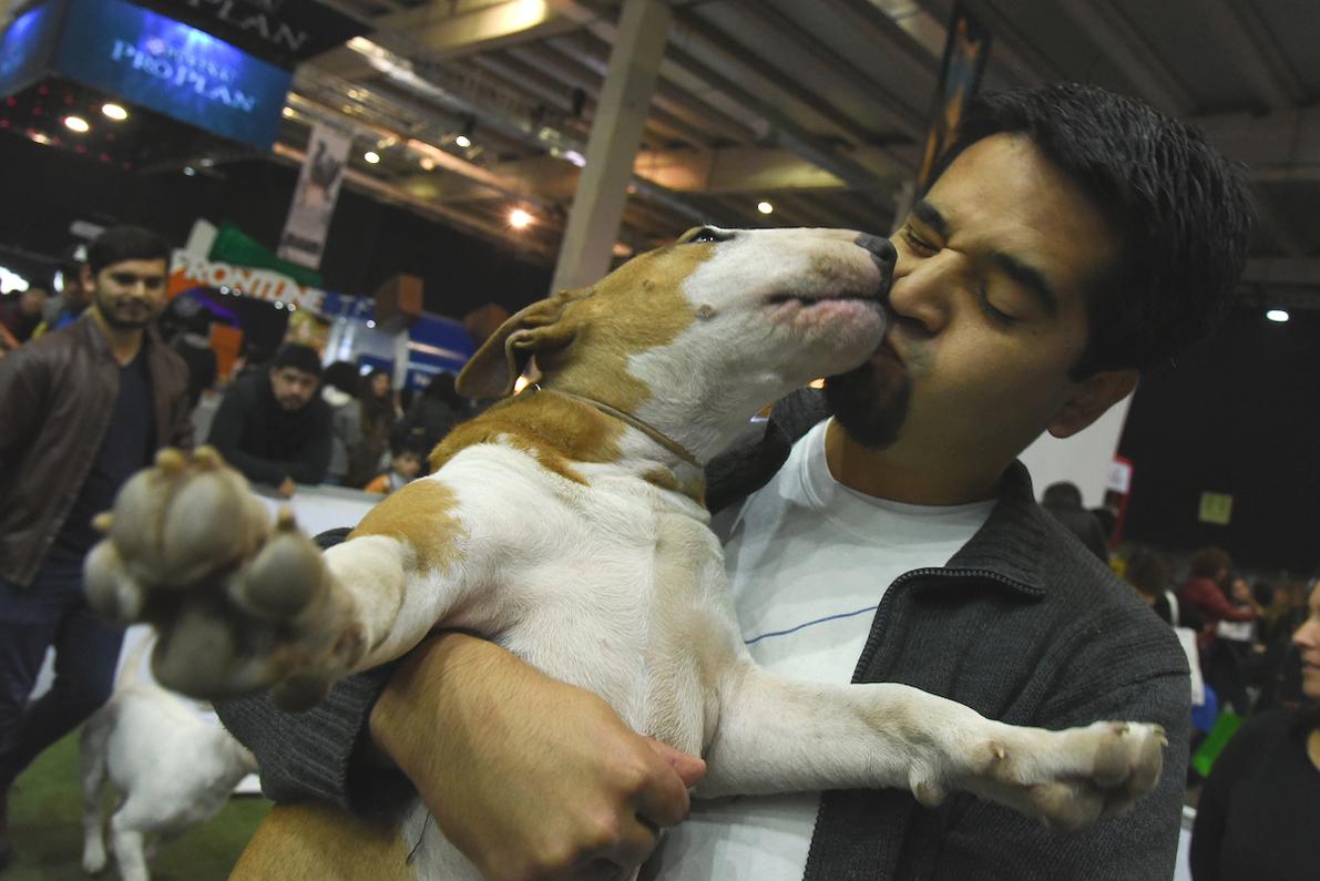 Regresa la Expo Mascotas & Animales 2018