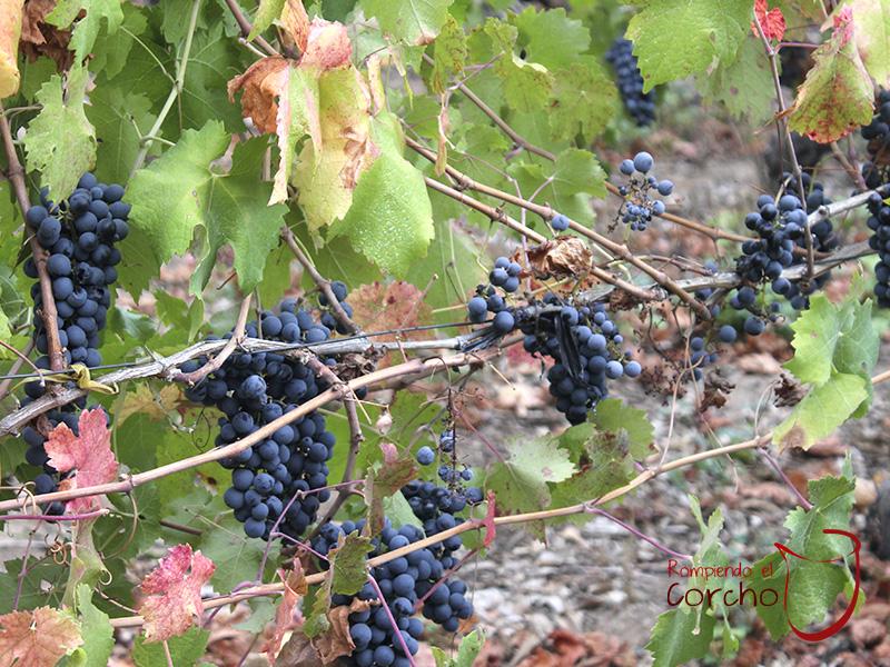 Inician postulaciones para participar en los Premios Best of Wine Tourism 2019