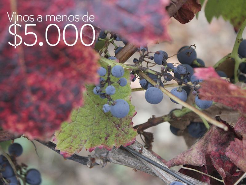 #VinosReC – Vinos a menos de $5.000